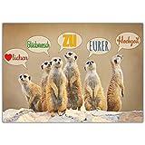 A4 XXL Hochzeitskarte ERDMÄNNCHEN mit Umschlag - edle & lustige Glückwunschkarte - Maxikarte zum Aufklappen zur Hochzeit Karte von BREITENWERK