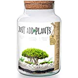 Annastore XXL Pflanzenterrarium inklusive allem - Nur noch Pflanze dazu - Fertig H 30 cm/H 18 / oder H 20- Pflanzterrarium Pflanzenglas - Flaschengarten (H 30 cm Ø 19 cm + Korken)