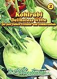 Kohlrabi, Delikatess Witte (Delikateß weißer) mittel N.L.Chrestensen S