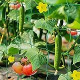 HUTHIM Ranknetz Rankhilfe Garten Tomaten Gurken 2x2.5m, Großer Rastergröße Sehr Passend Netz für Kletterpflanzen Gewächshaus Zubehör, mit 18Pflanzenclips 12Pflanzenbindern 20m Linie