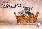 Bullys - Französische Bulldoggen 2022 (Wandkalender 2022 DIN A4 quer)