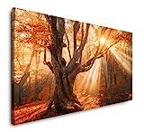 Paul Sinus Art Magischer Alter Baum 120x 60cm Panorama Leinwand Bild XXL Format Wandbilder Wohnzimmer Wohnung Deko Kunstdrucke