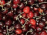 1st. Süsskirsche Lapins Kirschbaum100-150cm im Topf selbstbefruchtend Kirsche Obst B