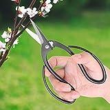 【𝐅𝐫ü𝐡𝐥𝐢𝐧𝐠𝐬𝒗𝐞𝐫𝐤𝐚𝐮𝐟】 Wurzelschere, Schnittwerkzeuge, hochhärter Stahlschichtstahl 195 mm für den Schnittzweig H