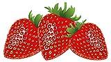 Wandtattoo Küche Rote Erdbeeren im Set Wandsticker Obst Dekoration E