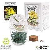 GROW2GO Kakteen Starter Kit Anzuchtset - Pflanzset aus Mini-Gewächshaus, Kaktus Samen & Erde - nachhaltige Geschenkidee für Pflanzenfreunde (Echter Tigerrachen)