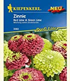 Zinnie 'Red Lime & Green Lime',1 Portion