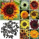 yanbirdfx Blumen Samen für Garten und Balkon-1000 Stück Sonnenblumenkerne Indoor Outdoor Hausgarten Bonsai Yard Zierpflanze - 1000 Stück Sonnenblumenk