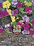 Sperli 87539 Wunderblume Broken Colours Mix (Wunderblumensamen)