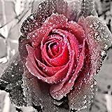 Riou DIY 5D Diamant Painting voll,Stickerei Malerei Crystal Strass Stickerei Bilder Kunst Handwerk für Home Wand Decor gemälde Kreuzstich Blumen-Serie Rose Blume Bild Muster (Mehrfarbig, 30 * 30cm)