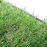 pille gartenwelt Katzengras Katzenwiese Hundewiese echter Rasen ca 60x40 cm ink