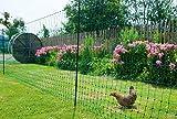 Kerbl Geflügelnetz PoultryNet 25 Meter (1,6 cm hoch, nicht elektrizifierbar, Zaun für Hühner, Enten + Schafe, inkl. Kunststoffpfähle, enge Maschen) 292279
