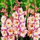 Garten blumen 5x Gladiolen zwiebeln Blumen für garten großblumige G