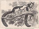 Zoo - Ansicht der Pferdeschweif-Eichhörnchen im Zoologischen Garten zu Dresden. [Grafik]