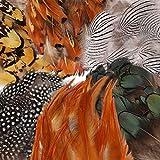180Pcs 6 Arten Sortierten Federn Handwerk,Mwoot Hühnerfedern Natur zum DIY Ohrring Wings Dream Catcher Crafts Aktivitäten Hochzeit Home Decoration Party