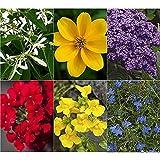 Kölle's Beste! Sommerblumen-Set Natürlich Biene, 6er-Set blau-rot-gelb-weiß