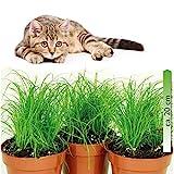 mgc24® Katzengras Cyperus zumula im 12er Topf ca. 20cm hoch - 3er Set