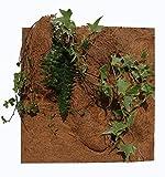 Reptiles Planet Natur Pflanzen Hintergrund für Terrarium, 20x 30x 1