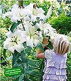 BALDUR Garten Tree-Lily Pretty Woman 3 Zwiebeln Baumlilien Lilium Hybride Lilien Zwiebeln w