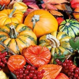 Ambiente Servietten Lunch / Party / ca. 33x33cm Holloween -Herbst - Autumn Harvest - Pumpkins - Kurbis