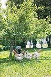 Kerbl 292217 Geflügelnetz 25 m,112 cm Einzelspitz, ohne Stromleiter, grü