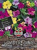 Wunderblume, Broken-Colours Mix