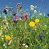 Kiepenkerl Reine Wildblumen-Mischung mehrjährig 250 g