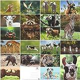 'LUSTIGE TIERE 8': 20-er Postkarten-Set mit lustigen Tieren (20 verschiedene Postkarten) für Sammler und Postcrossing von EDITION COLIBRI