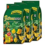 3 Sack Zitruserde Bodengold á 15 L = 45 Liter Spezialerde für Zitrusfrüchte